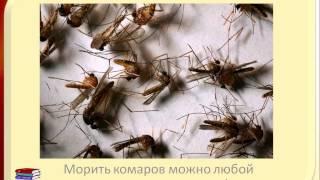 Сколько живет комар(Сколько живет комар? Комары живут недолго, потому что они такие организмы, которые очень интенсивно размнож..., 2015-07-05T15:18:20.000Z)