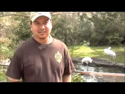 AAZK - New Orleans Whooping Crane Chat