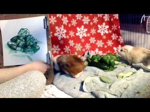 Drawing a Still-Life with my Guinea Pigs #coloroftheyearart #greenery