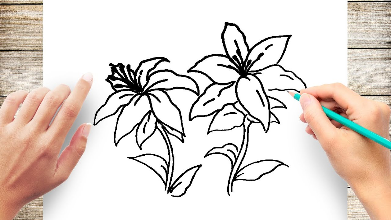 How To Draw Flowers Step By Step How To Draw Lily Flower Youtube