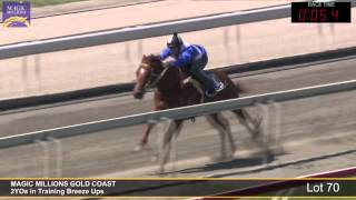 Lot 70 - 2YOs in Training Breezeup Thumbnail