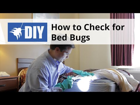 how to check for find bed bugs youtube. Black Bedroom Furniture Sets. Home Design Ideas