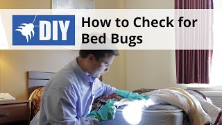 How to Check for & Find Bed Bugs - DIY Bed Bug Inspection