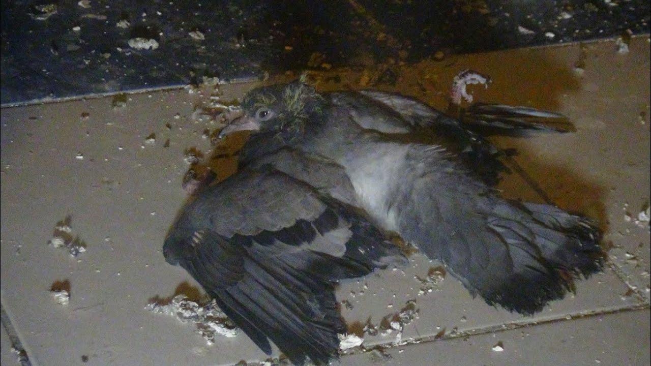 Yaralı Güvercini İtfaiye Ekipleri Kurtardı