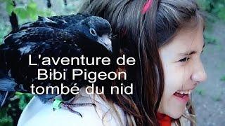 Comment rééduquer, puis libérer un jeune pigeon tombé du nid