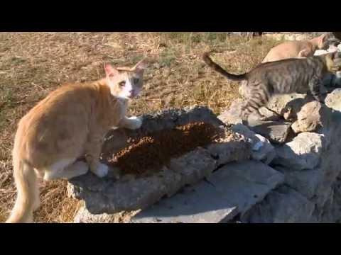 TVM Prime Time News 11JUN2016 - STRAY CATS in MALTA