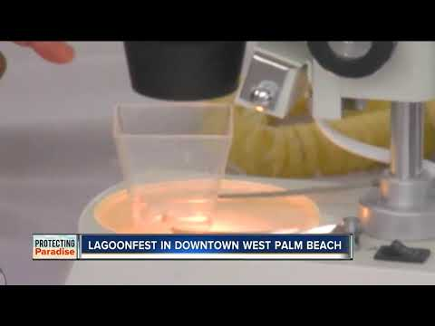 Lagoonfest Held In Downtown West Palm Beach