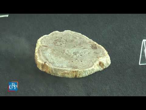 Testimonianze fossili in vetrina