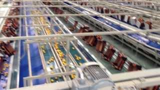 Tarend Citrus Packing Line - Tarend Narenciye Paketleme Hattı