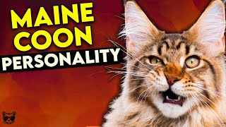Maine Coon Cat Personality: This Video Will Make You Want One!