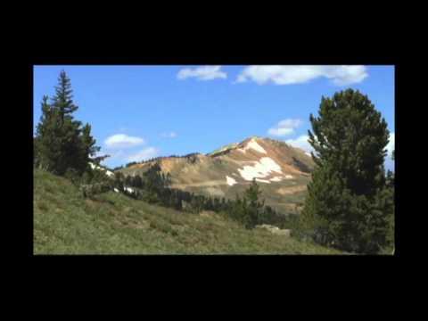 Greater Yellowstone Whitebark Pine