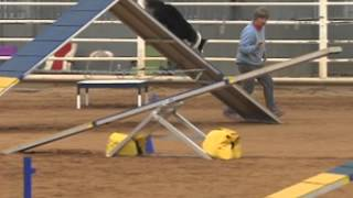 Dogs Test Their Agility Skills At The American Kennel Club Competition