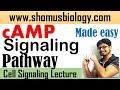 cAMP signaling pathway | cyclic AMP pathway made easy