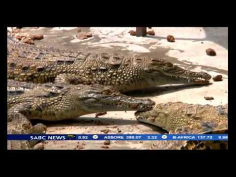 Crocodile meat exports to boost Zim economy