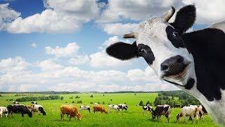 Качество жизни: домашнее молоко под запретом?