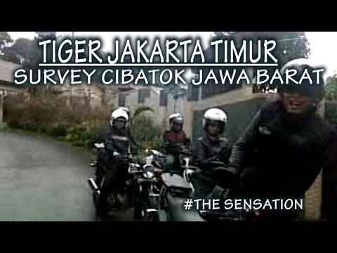TIGER JAKARTA TIMUR - Survey Cibatok (MotoVlog)