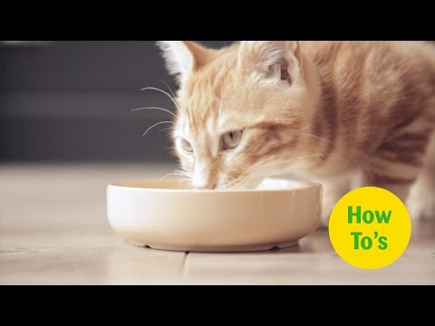 How to Feed your Cat