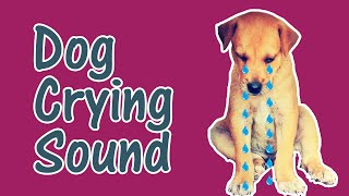 Dog Crying and Whining Loud [ Sound Effects of 5 Crying Dogs ]
