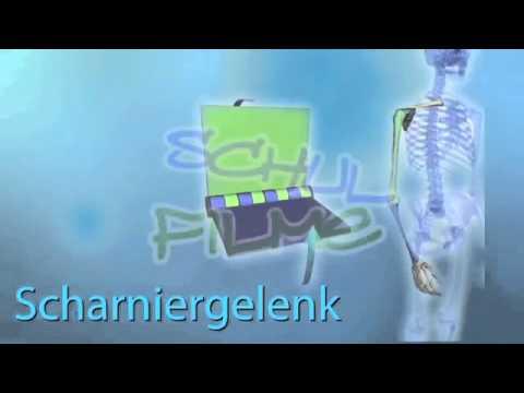 Film DVD / Biologie: BEWEGUNGSSYSTEM - GELENKE / Der menschliche ...