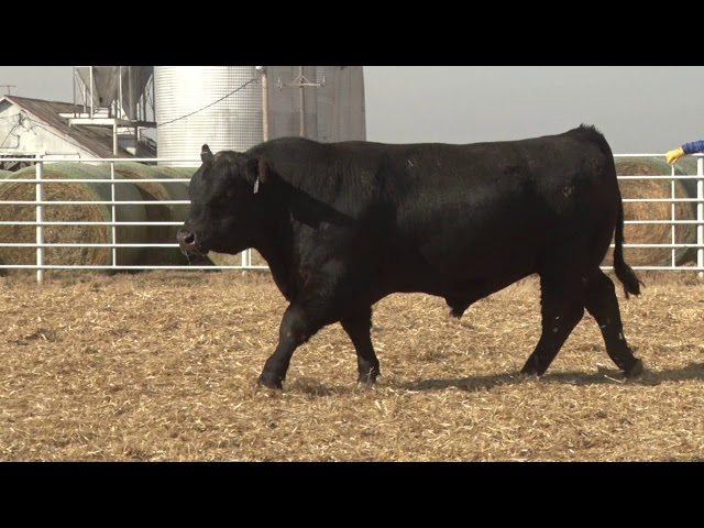 Express Ranches Lot 278