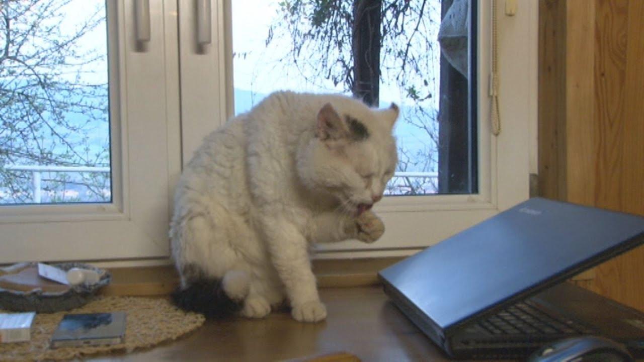 zriedkavé mačička pics