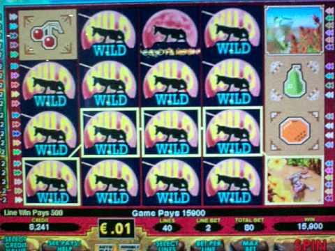 Coyote moon slot machines sun jo casino
