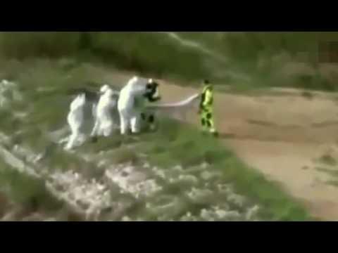 3 Vídeos De SEREIAS Capturadas Por Câmeras!!!!