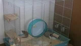 我が家のシマリス一花ちゃん。トイレを破壊して遊ぶのがブームです。