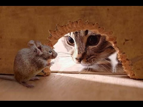 The real life tom and jerry