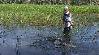 Wajib Basah Kaos Lampu untuk Dapat Ikan Kepala Ular Ukuran Besar Disini