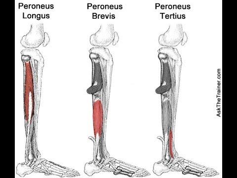 Peroneus longus, brevis and tertius exercises - YouTube