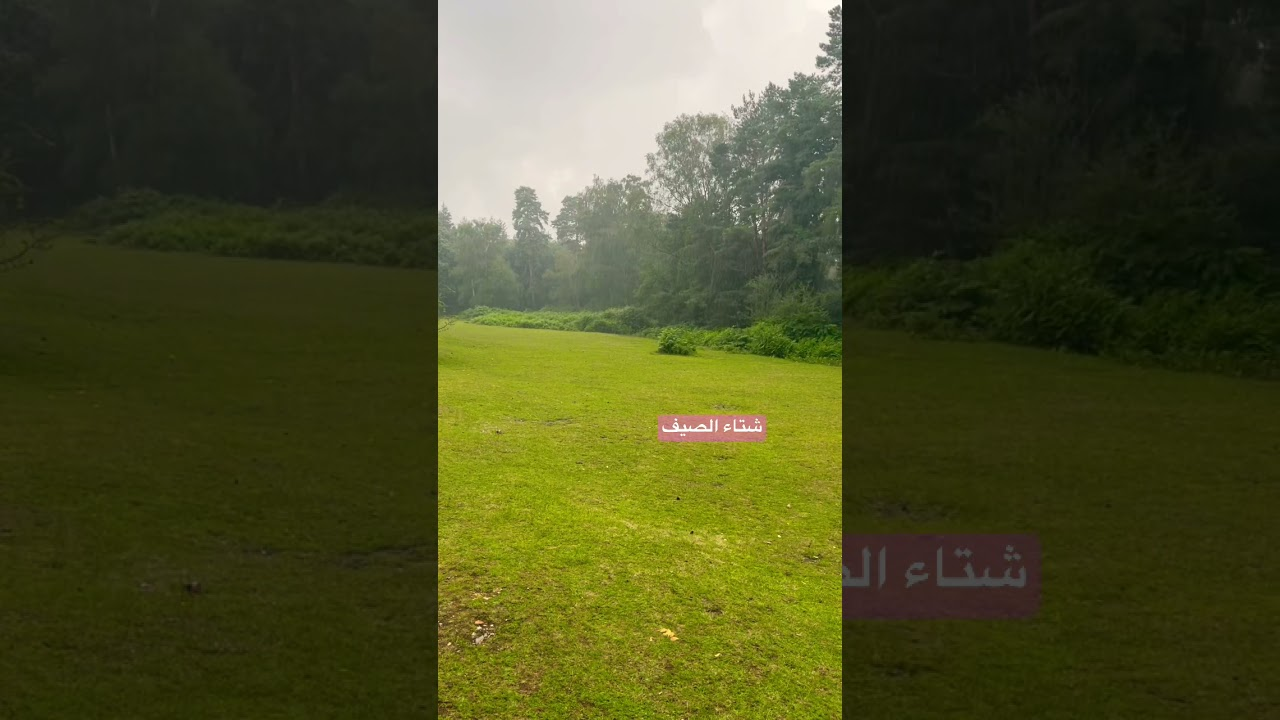 يوم ممطر -Rainy day in the New Forest