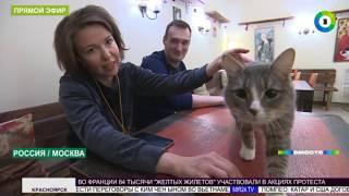 Котики в законе: животных в России взяли под защиту