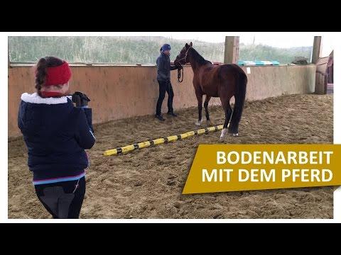 Bodenarbeit mit Pferden 🐴 Übungen mit Jenny von Blindly Follow Horses