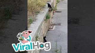 Mama Cat and Kitten Find Each Other || ViralHog