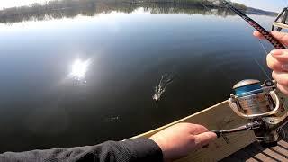 CT RIVER FISHING Catching Yellow Perch