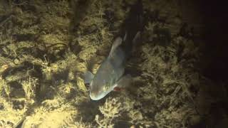 Подводная охота зимой. Лёд, прозрак, окуня