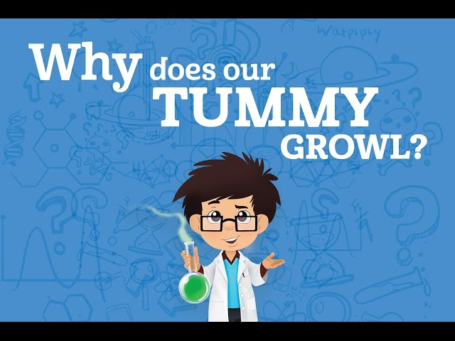 Why does our tummy growl? | Karim's WOW's (s01e6)