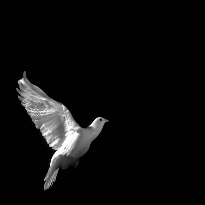 Jesus Hd Live Wallpaper Free Download The Dove Copyright 2009 Ed Braverman Youtube