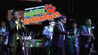 Nicho y sus Cachorros - Mix Cachorros Cumbias 2017