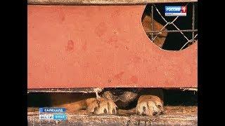 Как в Салехарде происходит процесс отлова бездомных собак и где содержаться пойманные животные