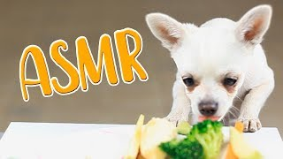 ASMR Dog Reviewing Different Types of Food I MAYASMR