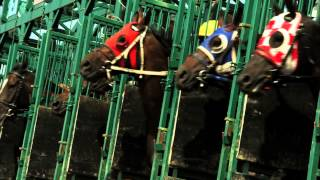 Horse Racing Alberta - There's a Horse for Everyone