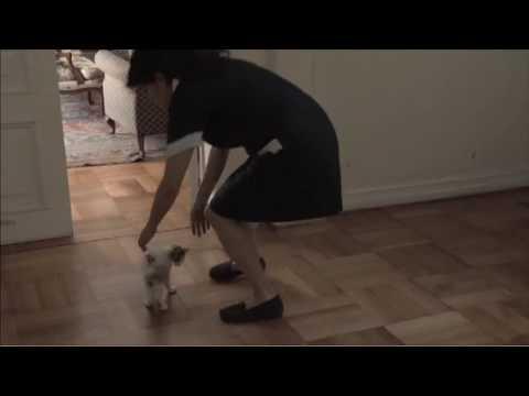 """""""The Maid""""/ """"La Nana""""  Trailer (Chile)"""