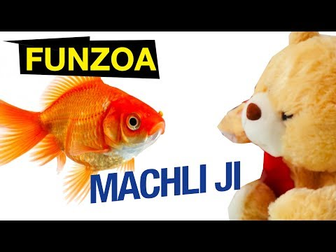 MACHLI JI 🐟  Funzoa Teddy Video | Bojo Teddy | Funny Hindi Video | Fish Song | Hindi Love Song 2017