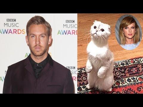Taylor Swift's Cats Love Calvin Harris Too?
