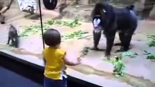 Павиан и маленький мальчик(, 2014-02-24T07:47:51.000Z)