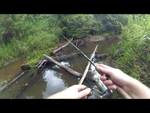 С Клязьмы на лесную микро-речку