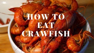 HOW TO EAT CRAWFISH (HOW TO EAT A CRAWFISH)