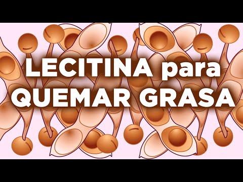 3 propiedades de la lecitina de soja para quemar grasa más rápido